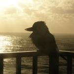 Coastal Dweller on WordPress and Twitter