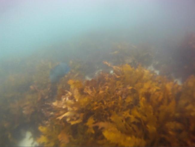 800_Seaweed