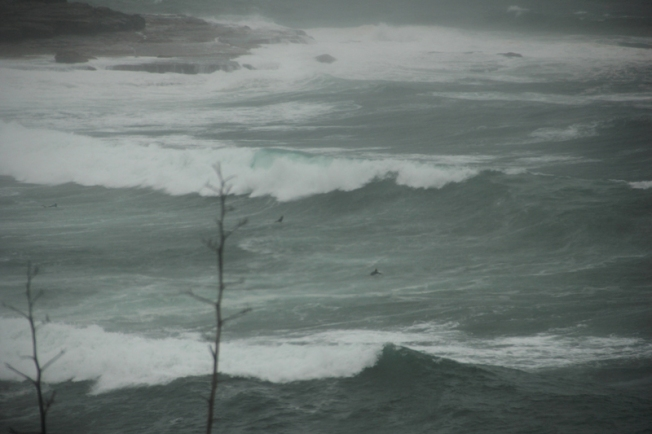 800_rough_surf