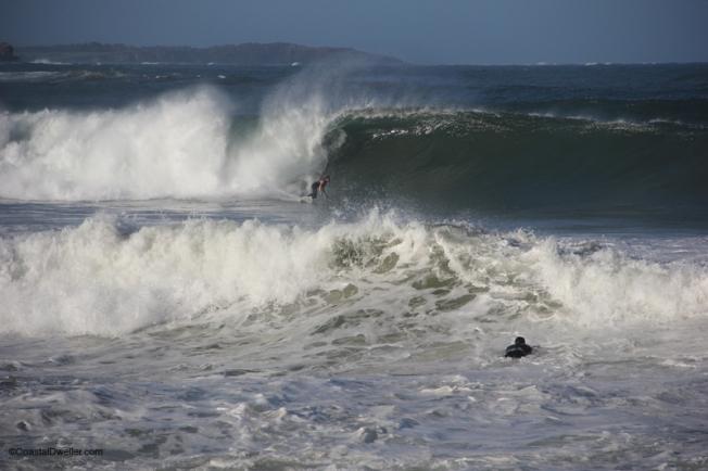 C_Manly_surfer